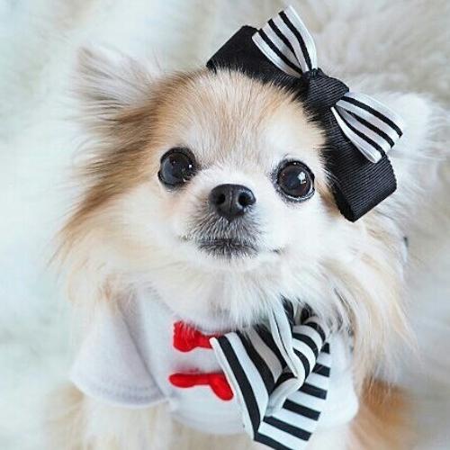 Cute_Cute's icon